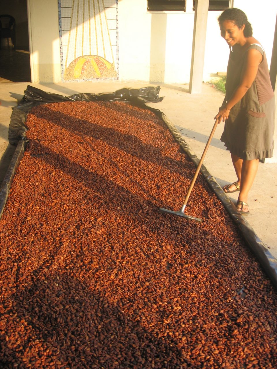 12/05/2014 – Cacao, tome II: 999 questions à résoudre, et les 1001 imprévus